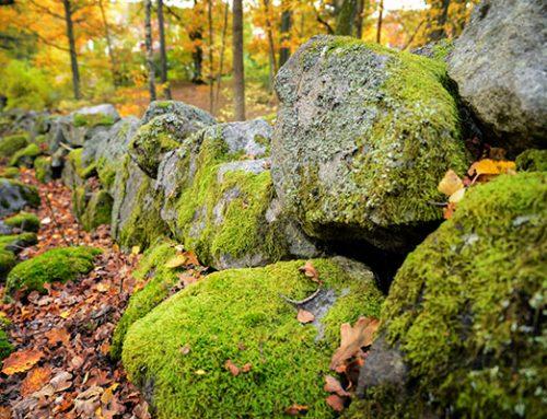 Småmiljöer i odlingslandskapet